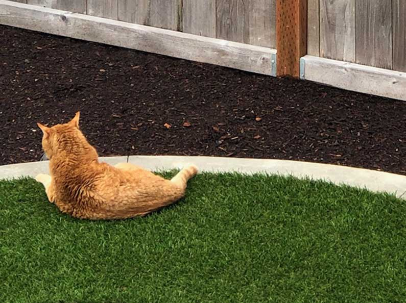 The synthetic turf installed by Olympic Landscape is pet-friendly and anti-microbial.