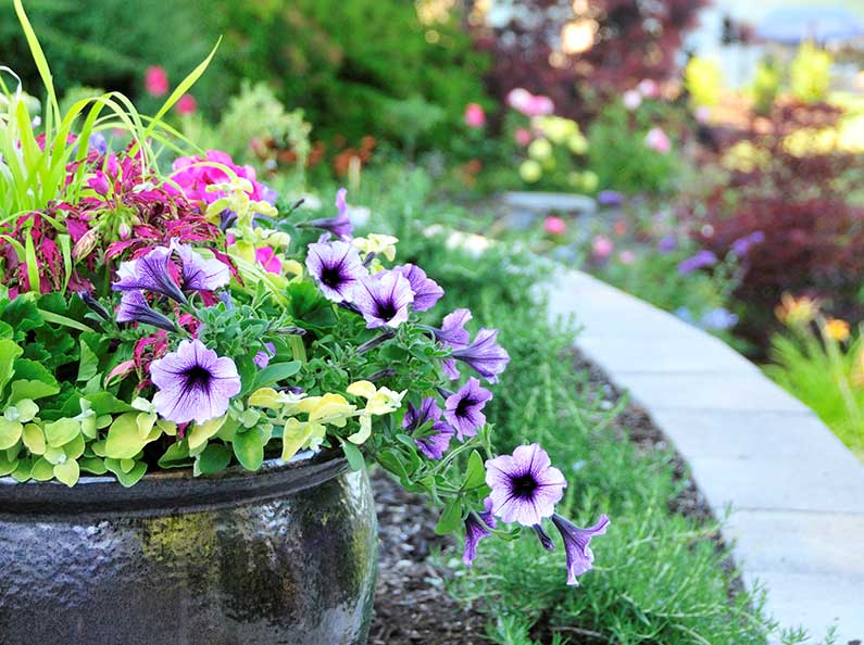 Raised flower beds and potted plants can be the perfect garden accent to bring life and color to your yard.